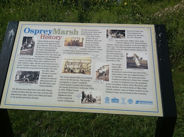 A close up of an Interpretive sign at Osprey Marsh talking about the areas history