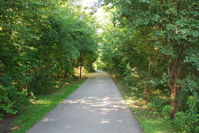 Trelawny Woods Forest Path